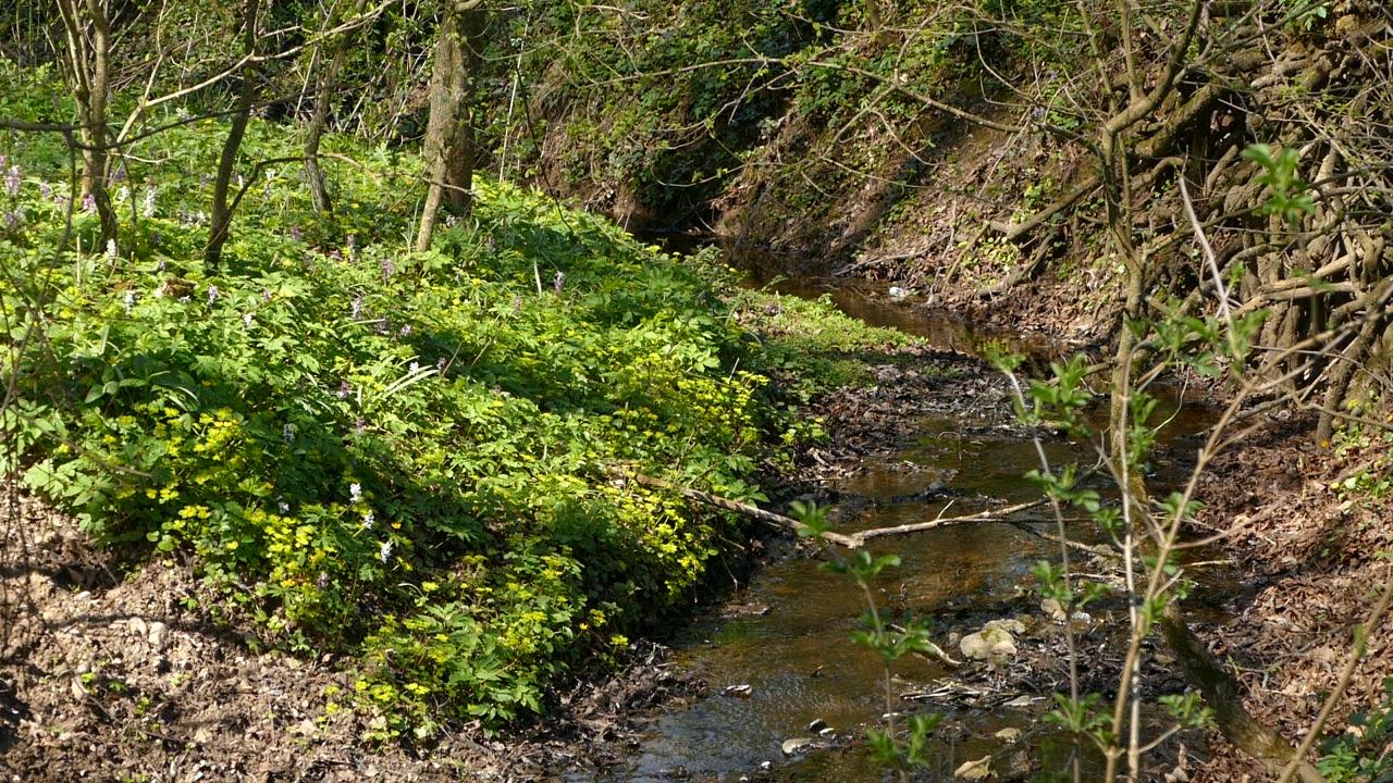 Biljke sa liste zaštićenih prirodnih retkosti