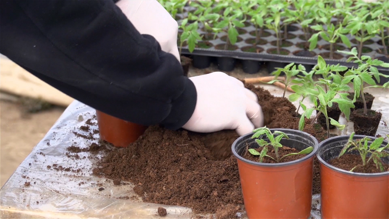Vitalnost i otpornost biljaka