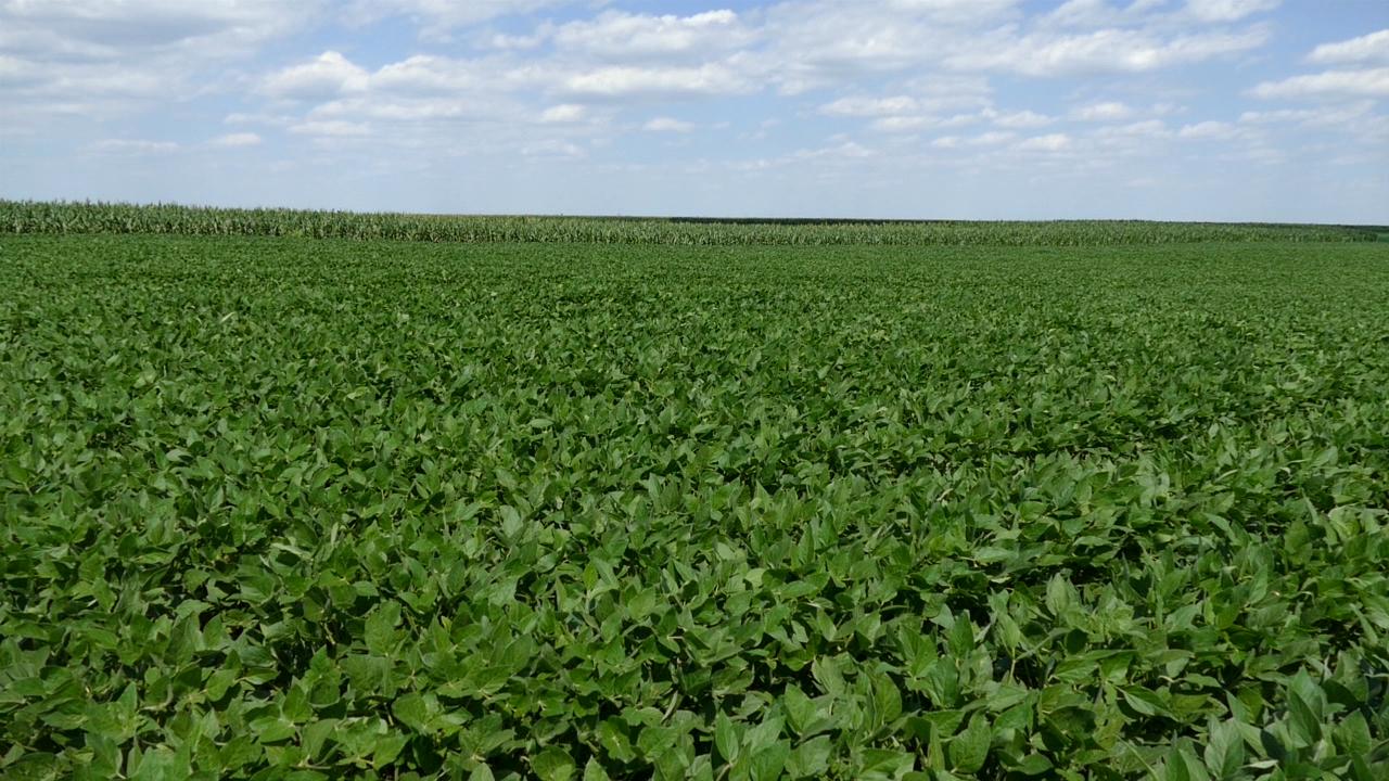 Aktuelni agroekološki uslovi odraziće se na prinos