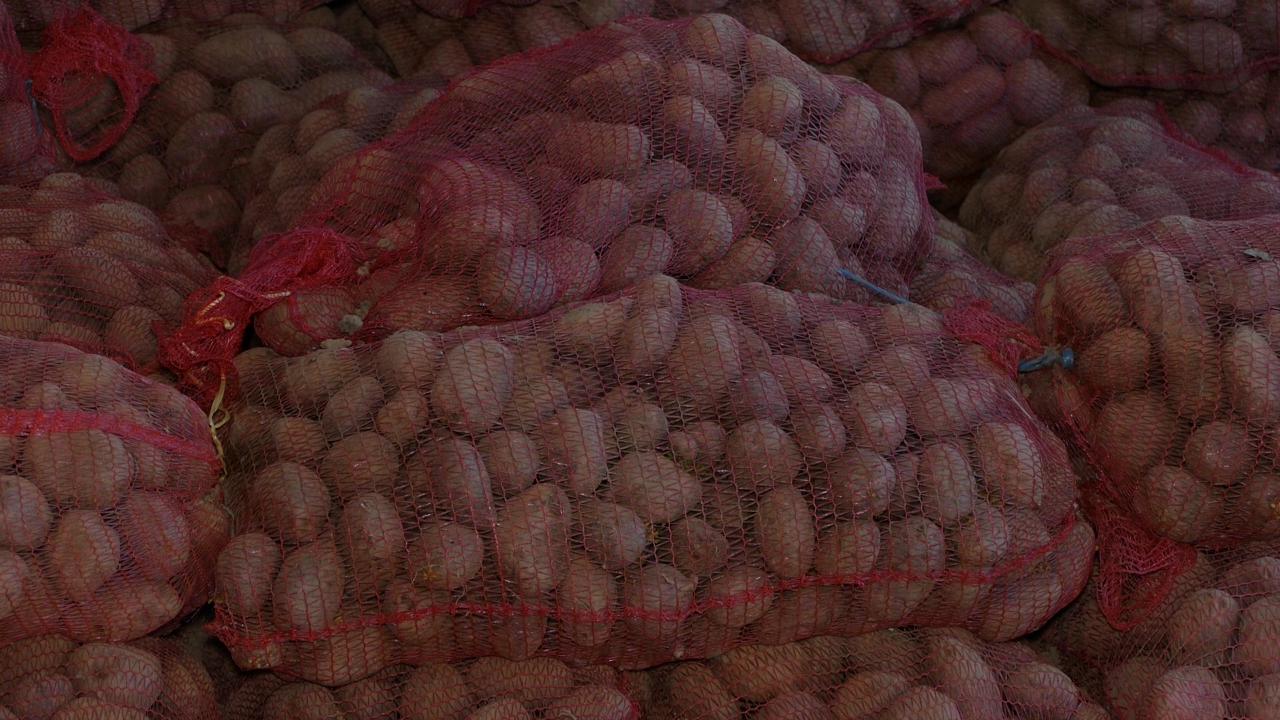 Proizvodnja krompira na najnižim granama