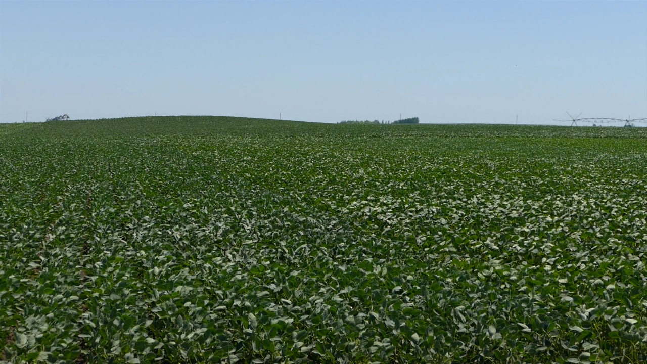 NON GMO soja komparativna prednost Srbije