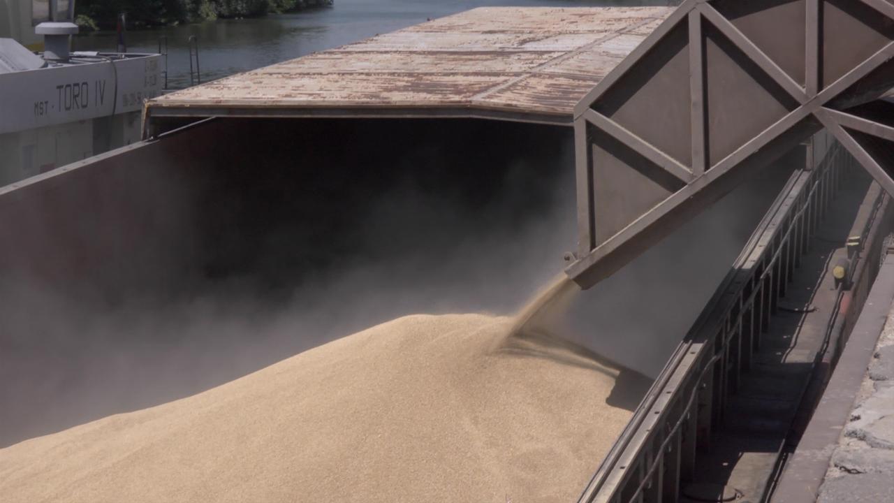 Sve manje površine pod pšenicom