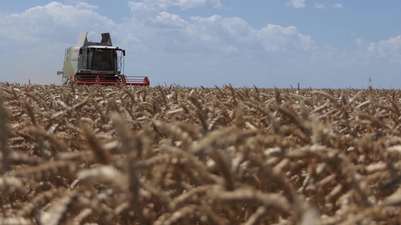 Pšenica u silosima dok cena ne poraste