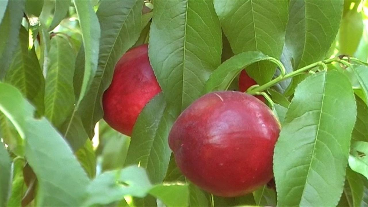 Zdrav život, voće i sport