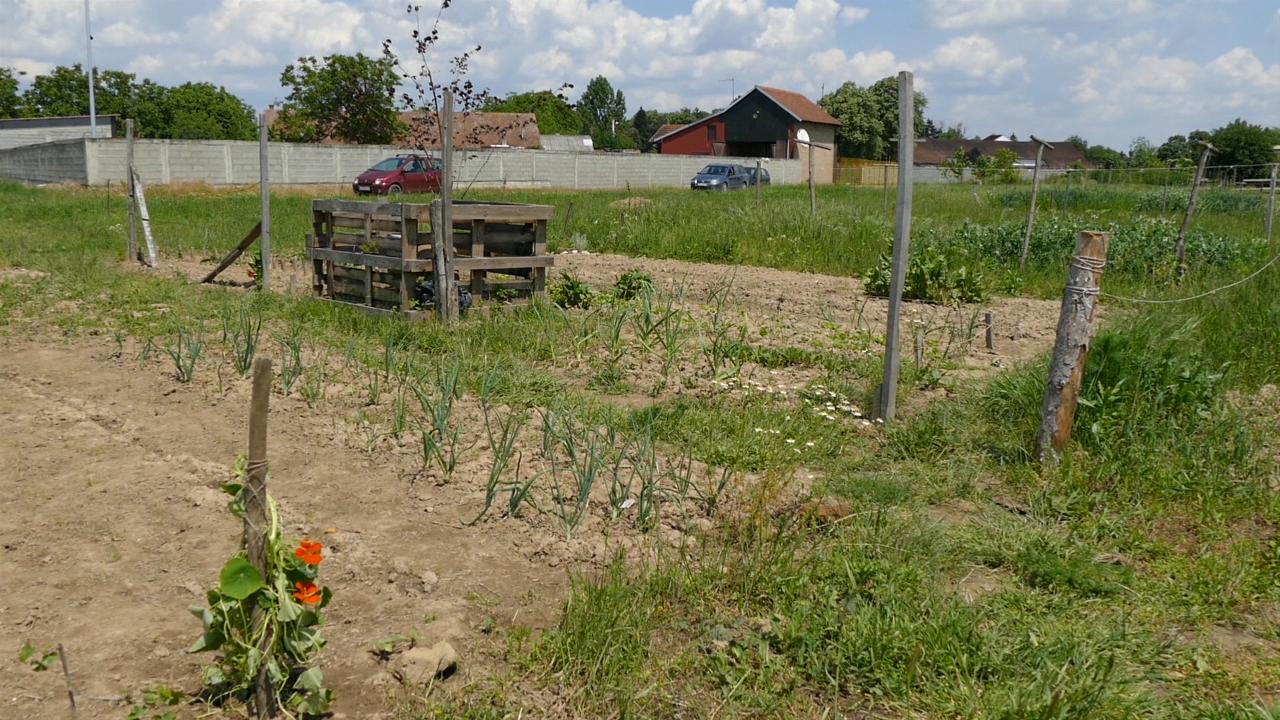 Gradska bašta za organsku proizvodnju