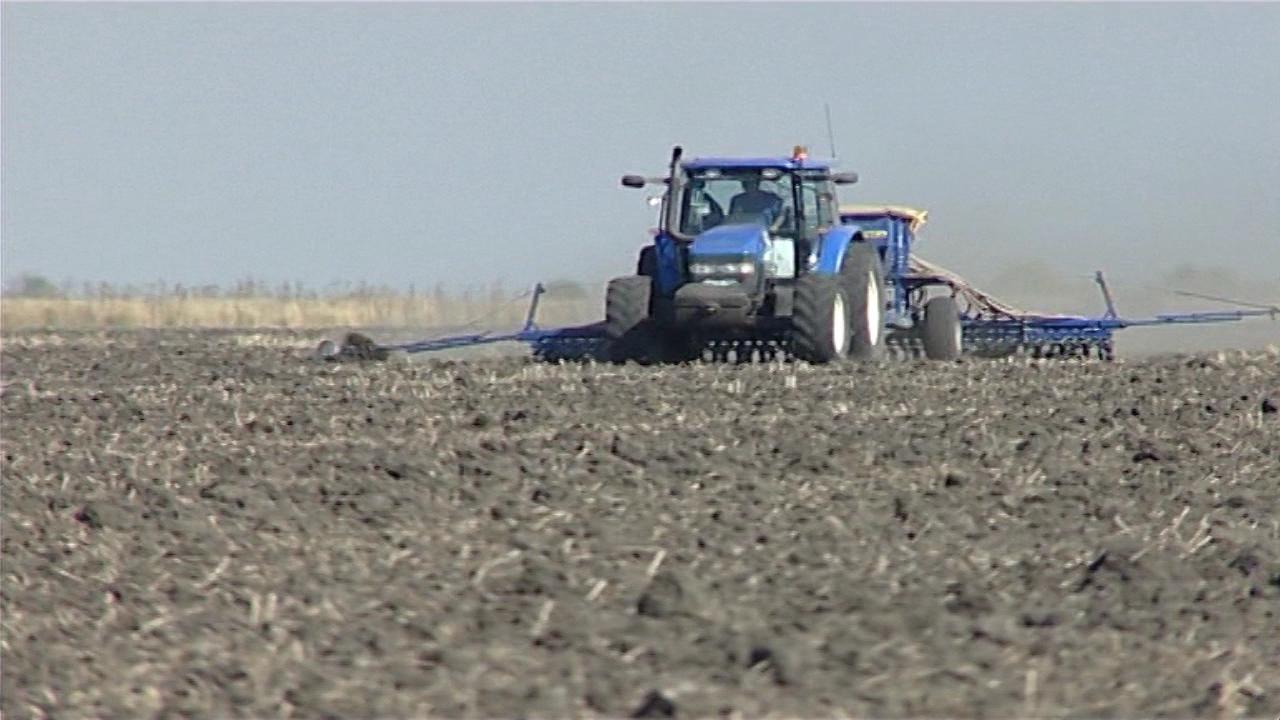 Ove godine pod pšenicom oko 600.000 hektara