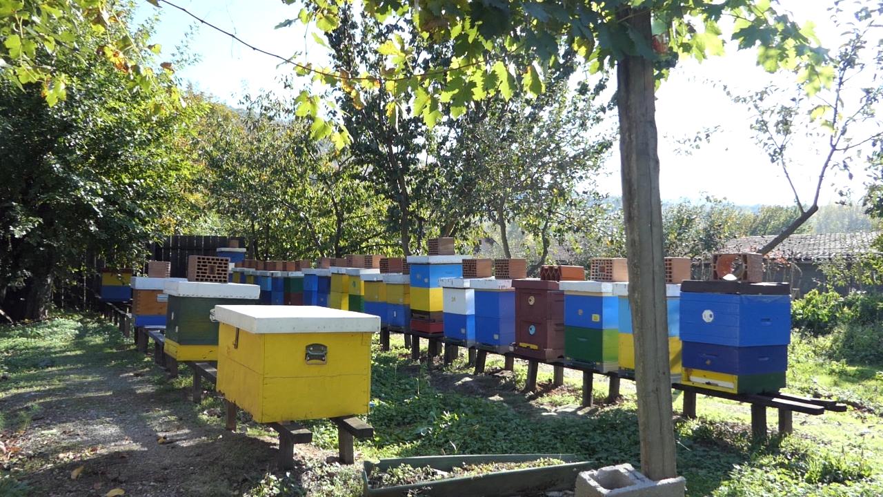 Loša godina ne menja cenu meda