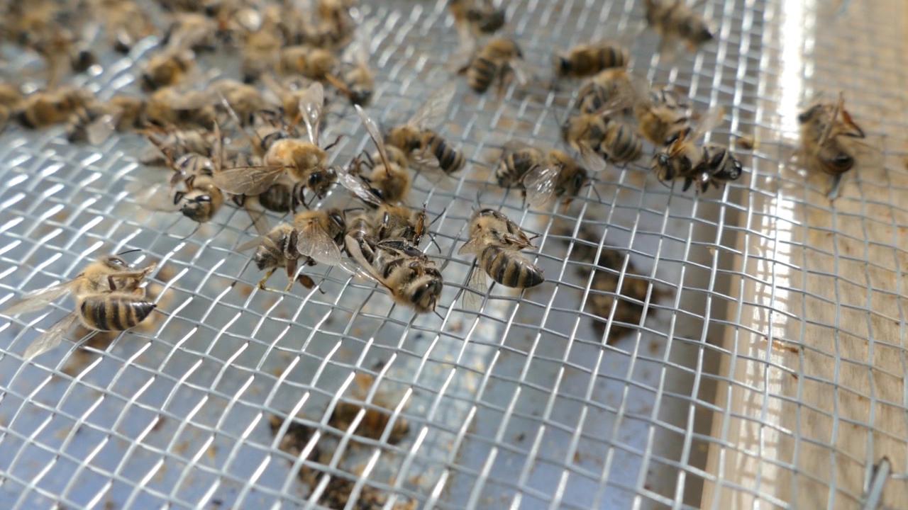 Pčelari nezadovoljni, jer je krivac i dalje nepoznat
