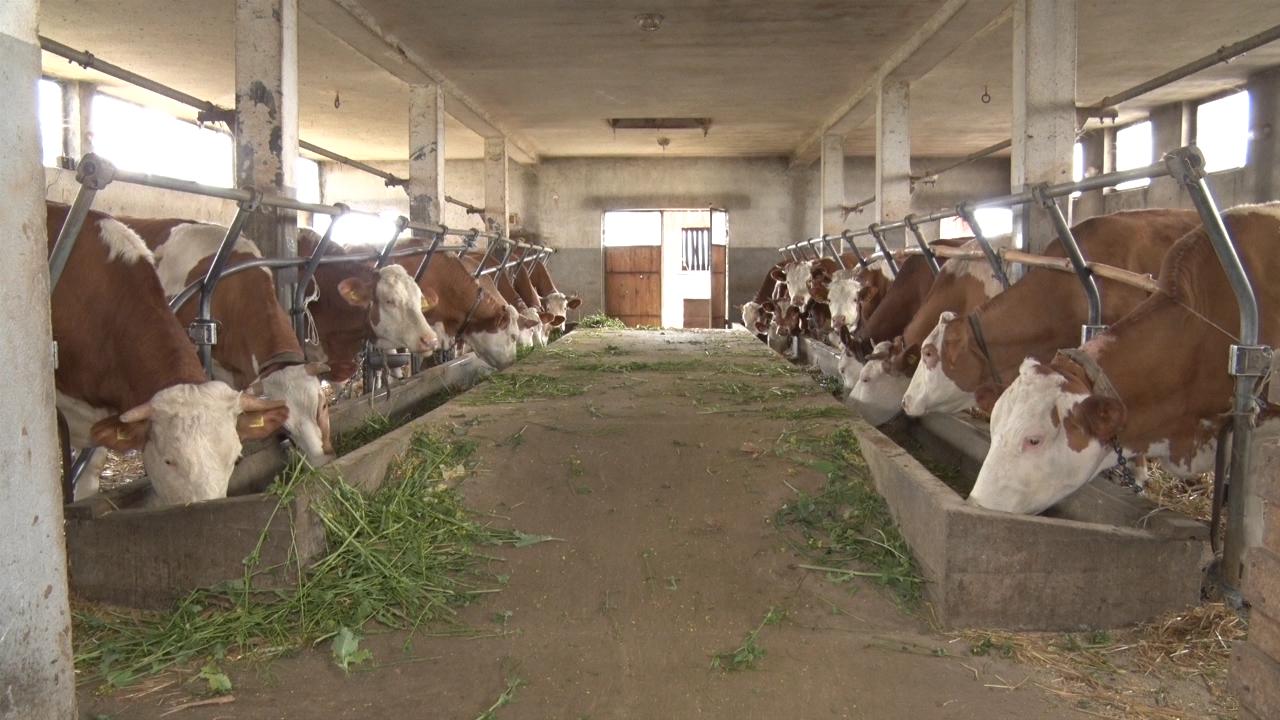 Uvoz govedine sličan kao i u 2016.