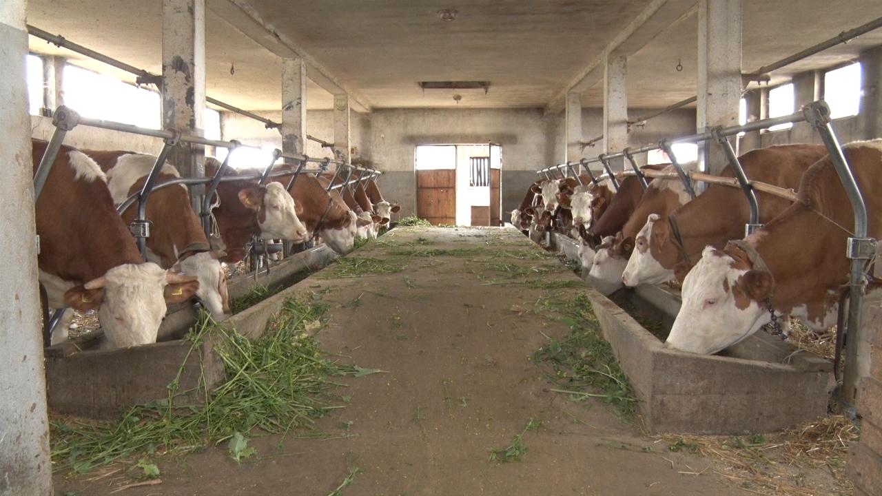 Neophodno povećati proizvodnju mesa i mleka