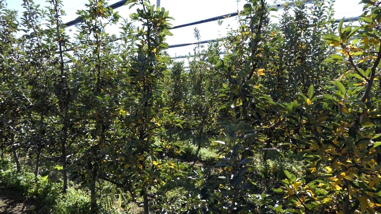 Elektrifikacija fruškogorskih voćnjaka i vinograda