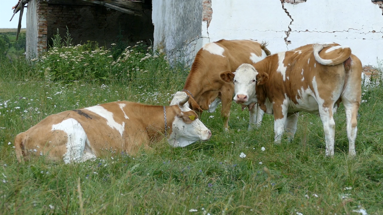 Otkupljivaće goveda iz cele zemlje