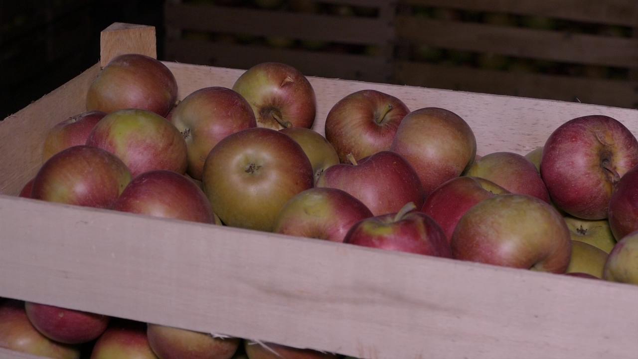 Prepakivali jabuke iz Poljske i izvozili ih u Rusiju