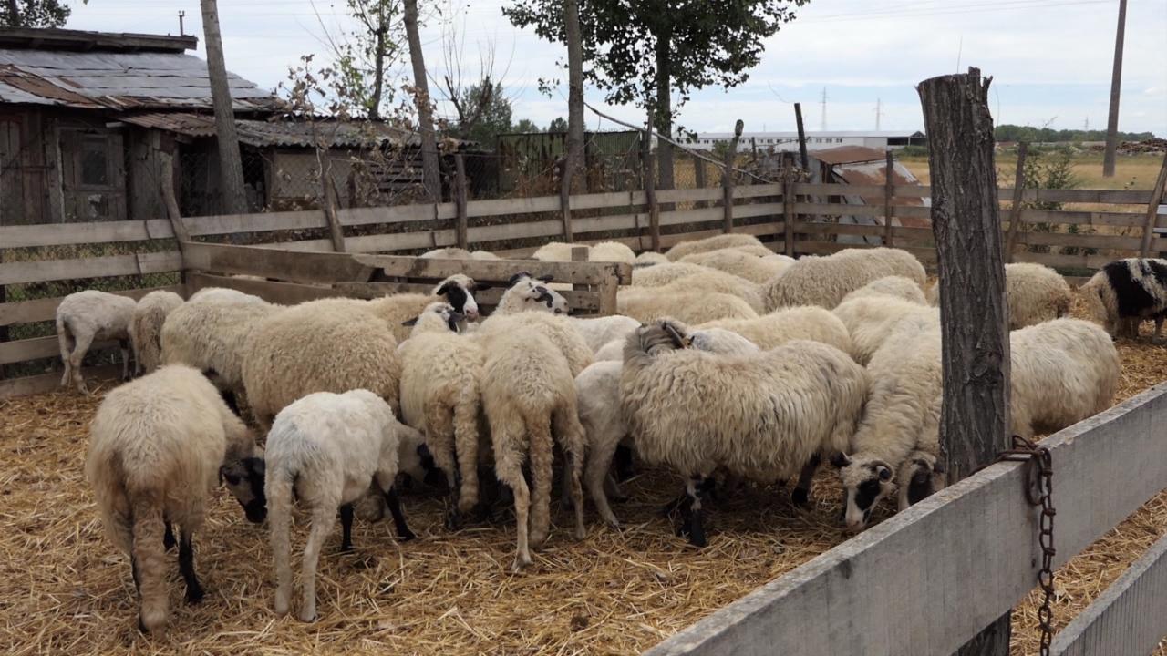 Nemaju gde da skladište vunu
