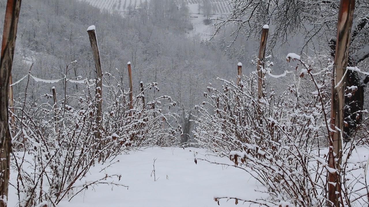Sneg popravio rezerve vlage u zemljištu