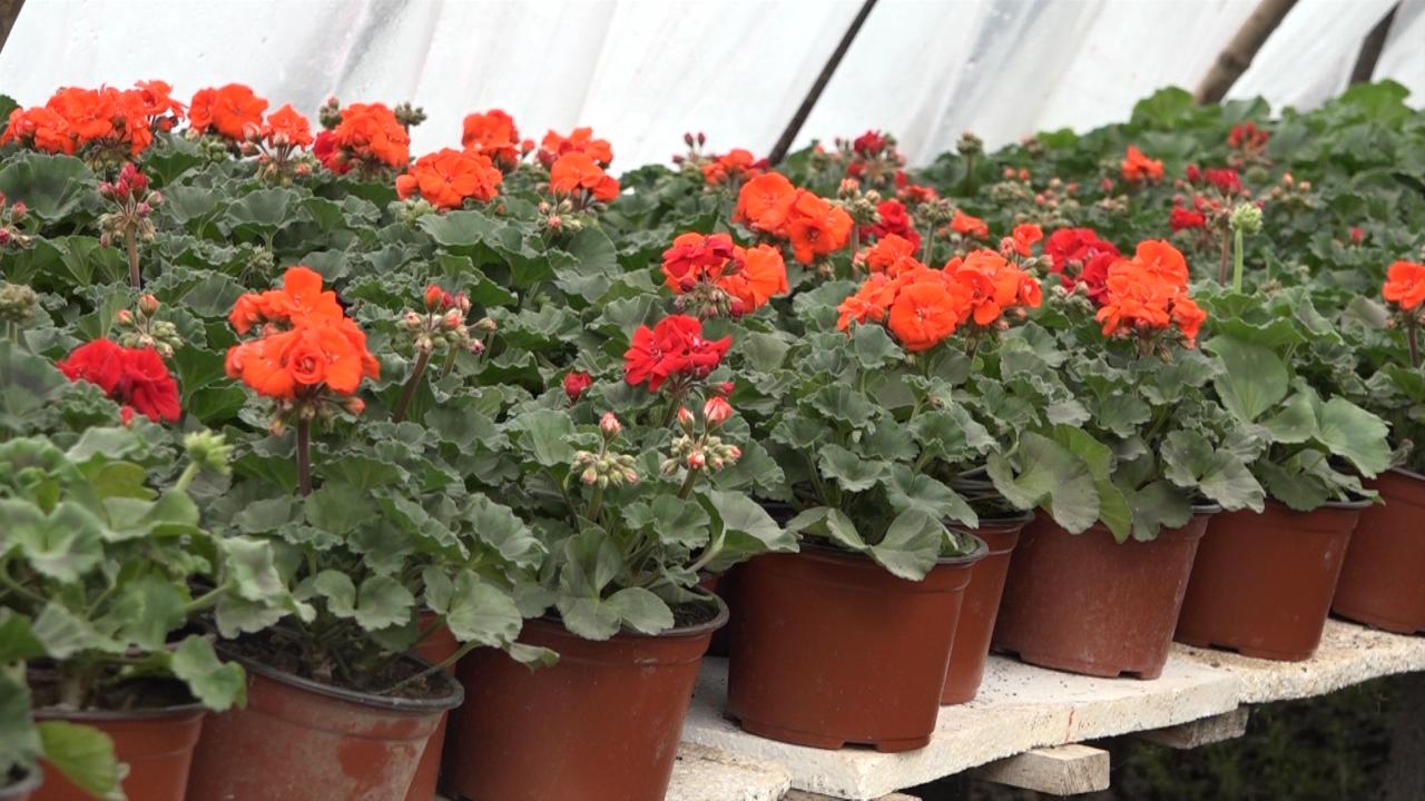 Cveće kao glavni izvor prihoda