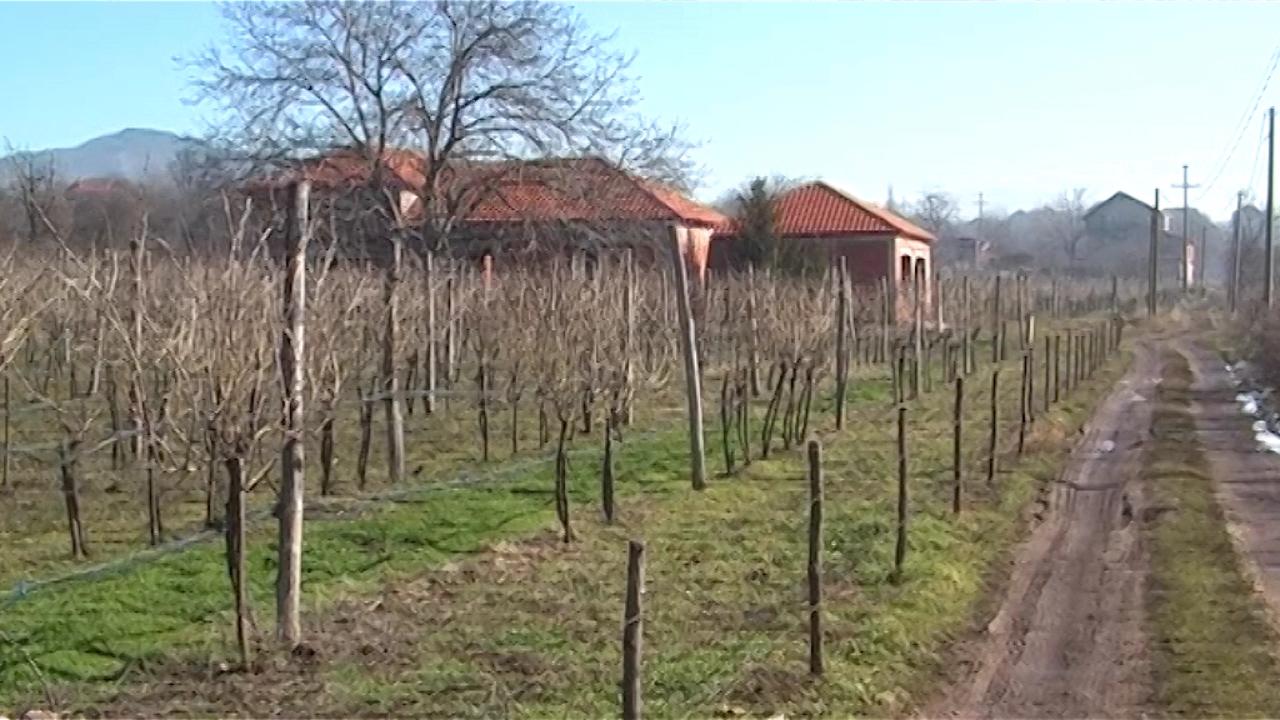 Vinogradarstvom do  razvoja sela