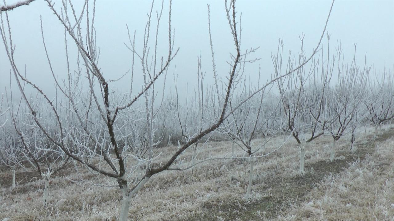 Od mraza najugroženiji voćnjaci u Vojvodini
