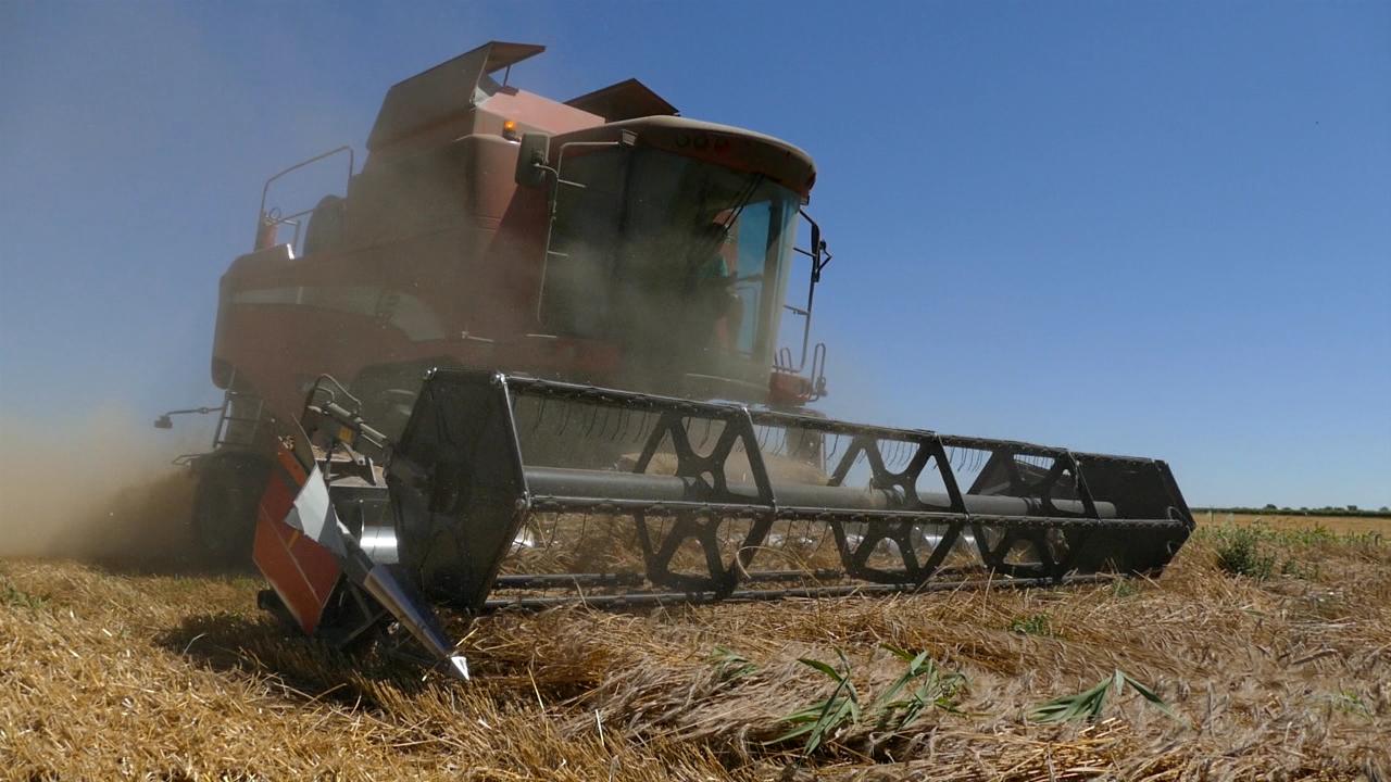 Rusija preuzima primat u izvozu žitarica
