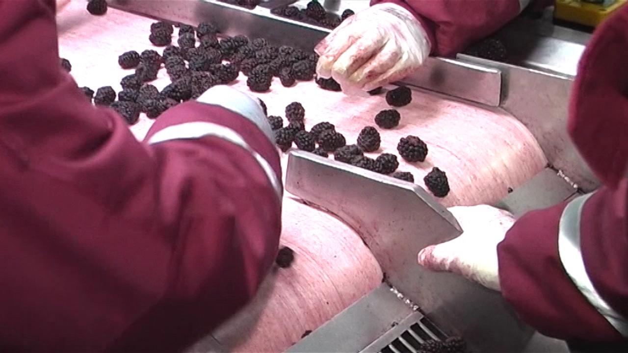 Nemačke kompanije zainteresovane za srpsko organsko voće