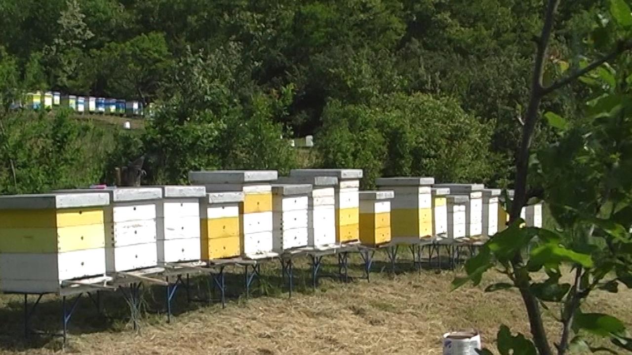 Priprema pčelinjih zajednica