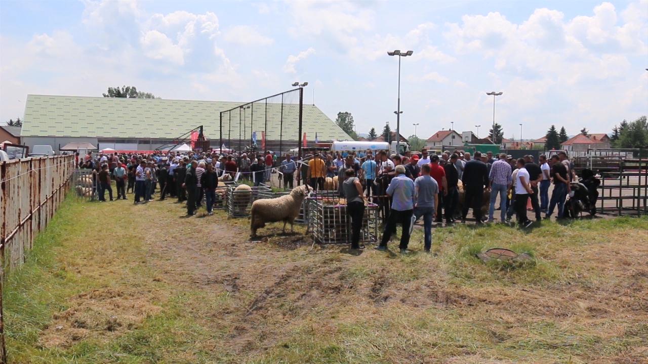 Na sajmu izložba goveda i mehanizacije