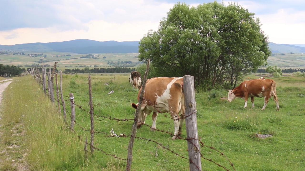 Sve manje stočara u zapadnoj Srbiji