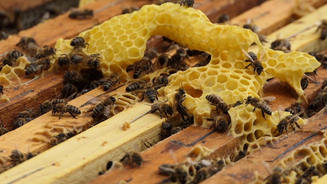 Prosečna godina za pčelare iz Alibunara