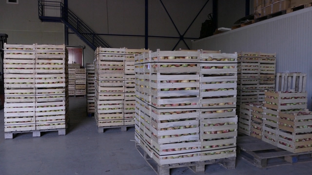 Indijci plaćaju jabuku od 45 do 50 evrocenti