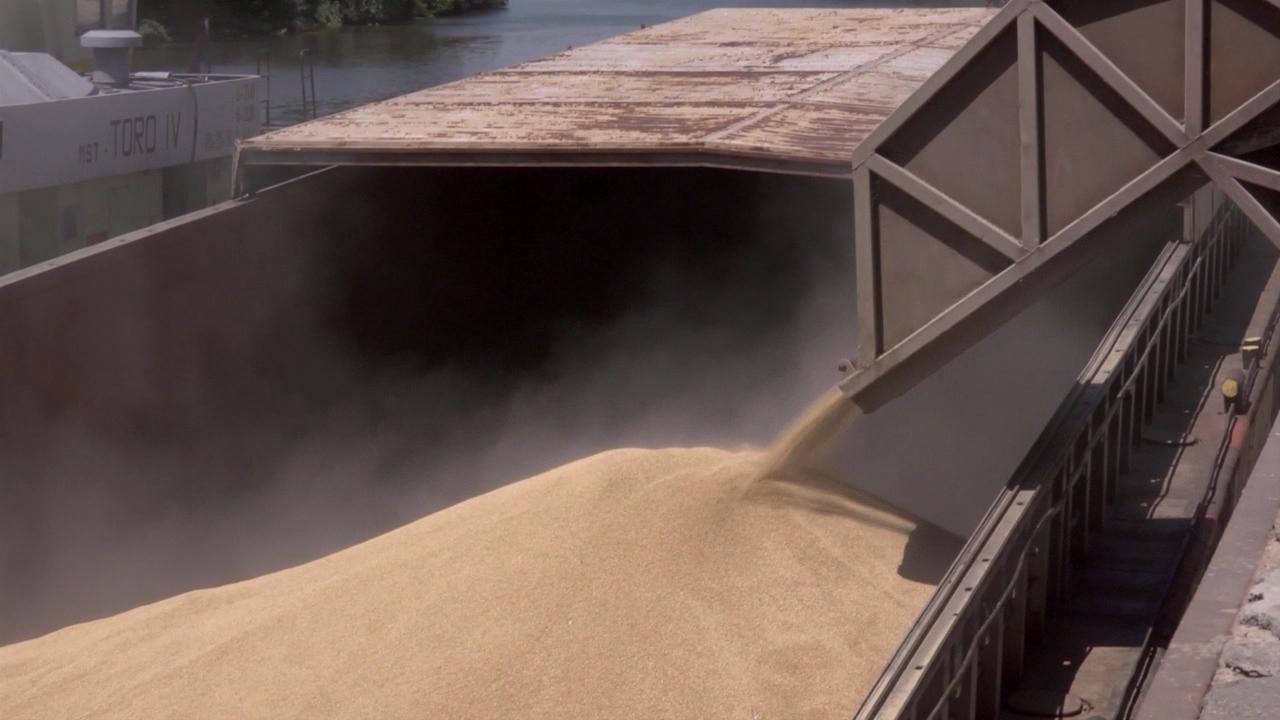 Pšenica i dalje u fokusu trgovanja
