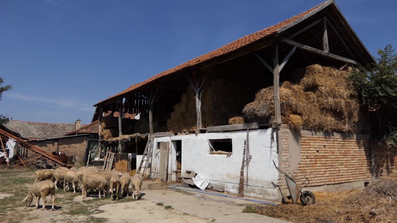 Ratarstvo, povrtarstvo i ovčarstvo kao izvor prihoda