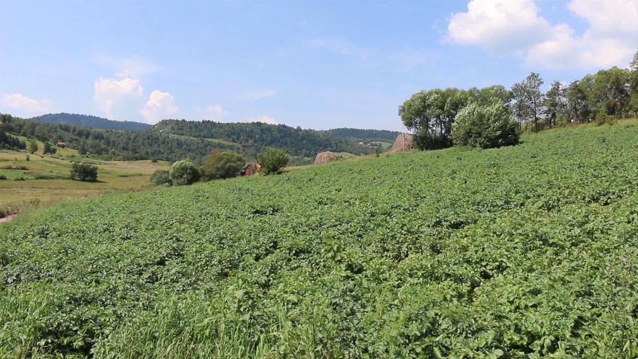 U zlatarskim selima dobar rod krompira
