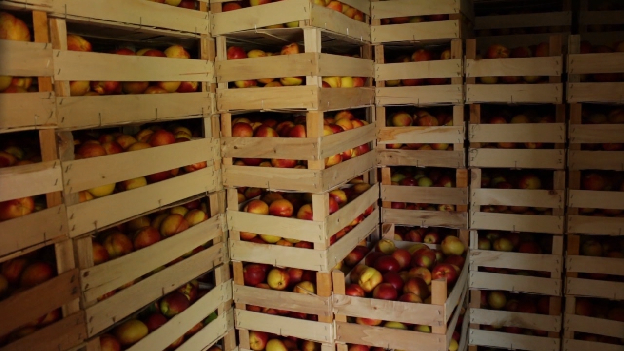 Voće vraćeno iz Rusije biće korišćeno za preradu