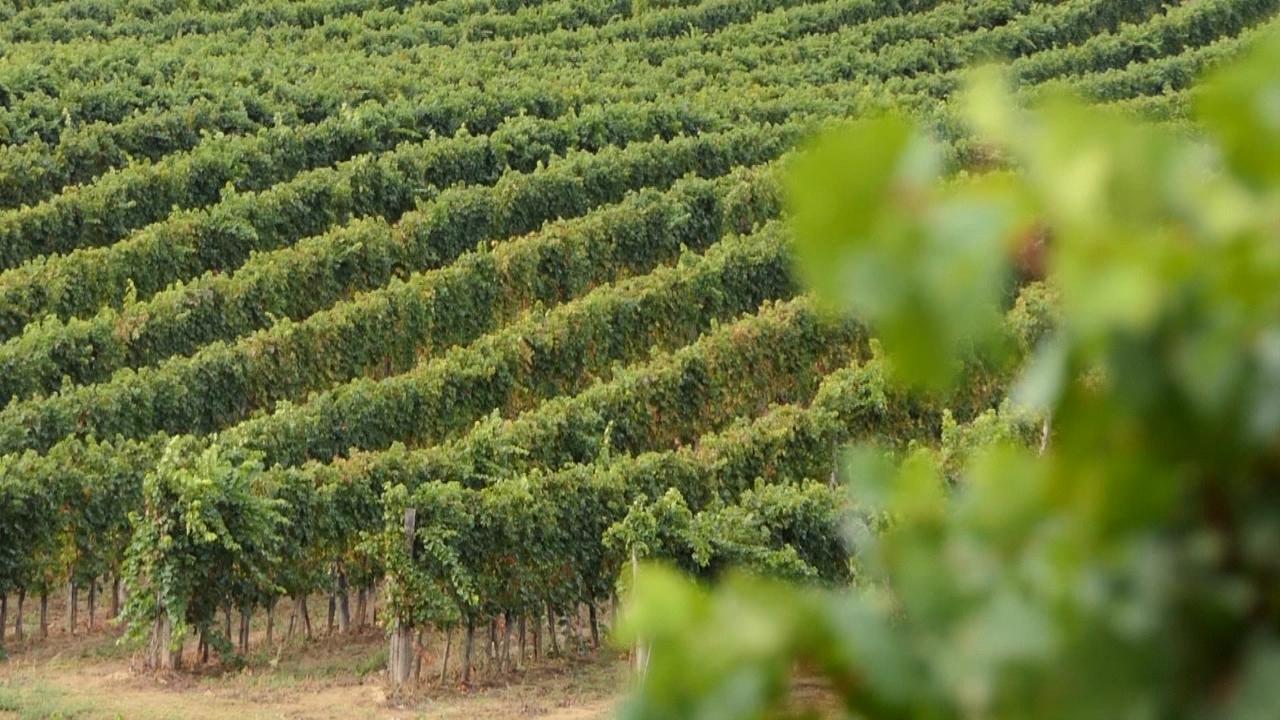 Godišta značajnija za vina gde klima varira
