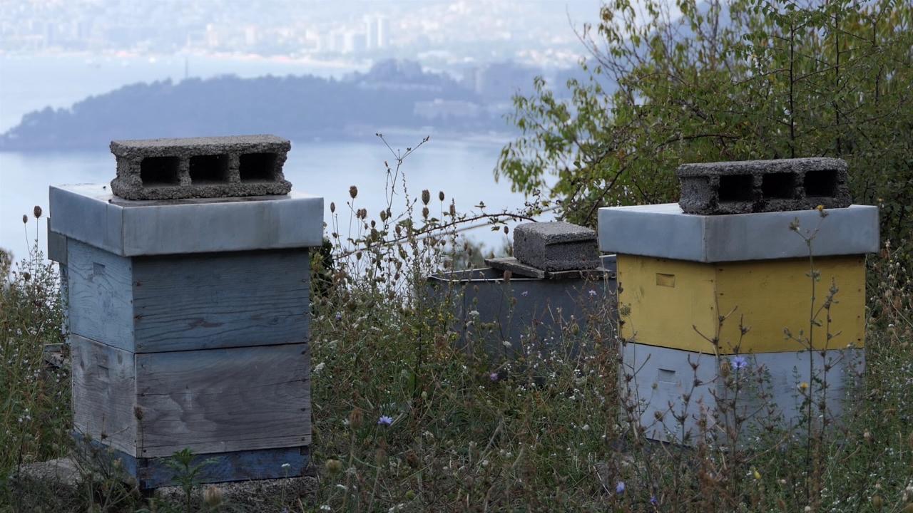 Sve više pčelara u Budvi