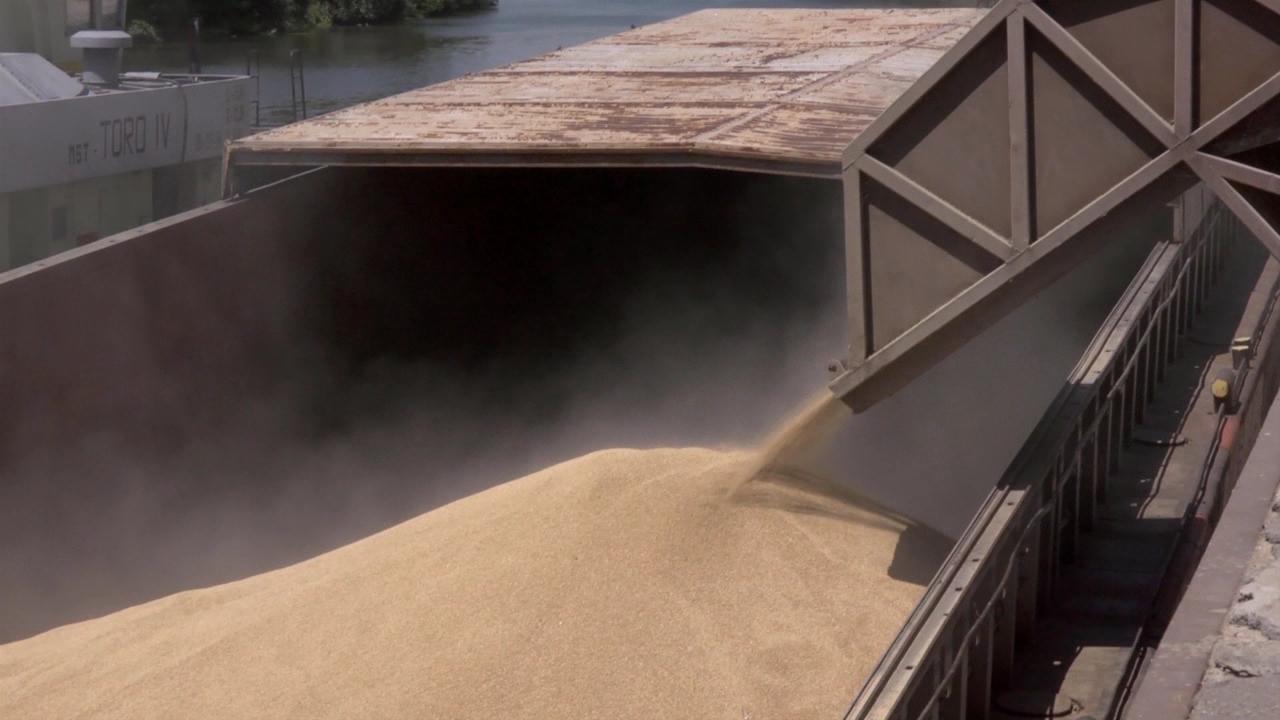 Izvoz pšenice u stagnaciji