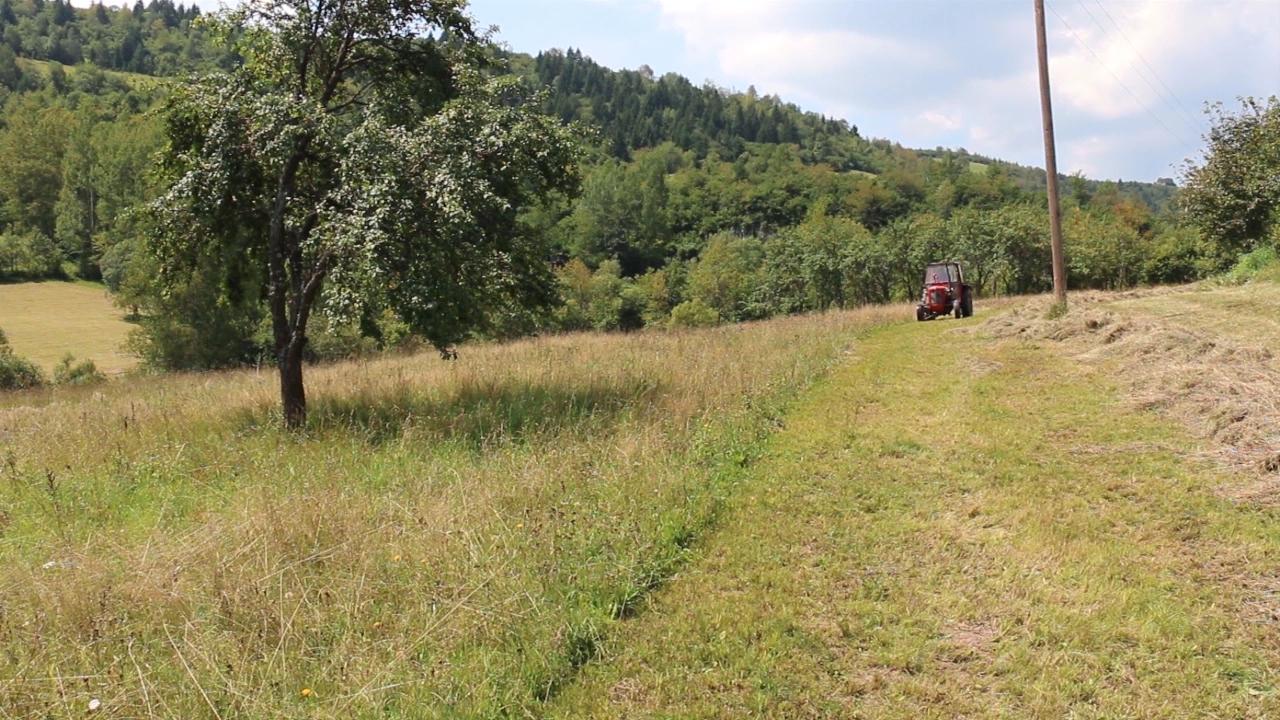 U Pirotskom okrugu kukuruz dobro rodio