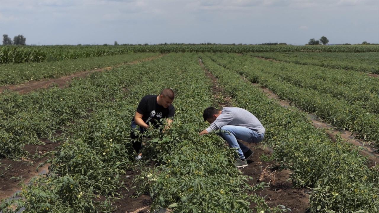 Za mlade poljoprivrednike do 75 % bespovratnih sredstava