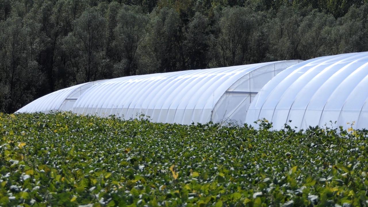 Primena inovativnih modela za veći profit u povrtarstvu