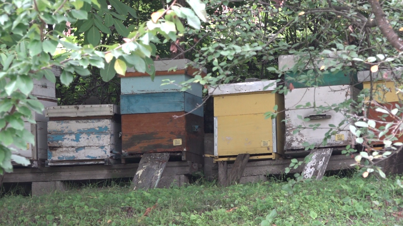 Priprema pčela za zimu