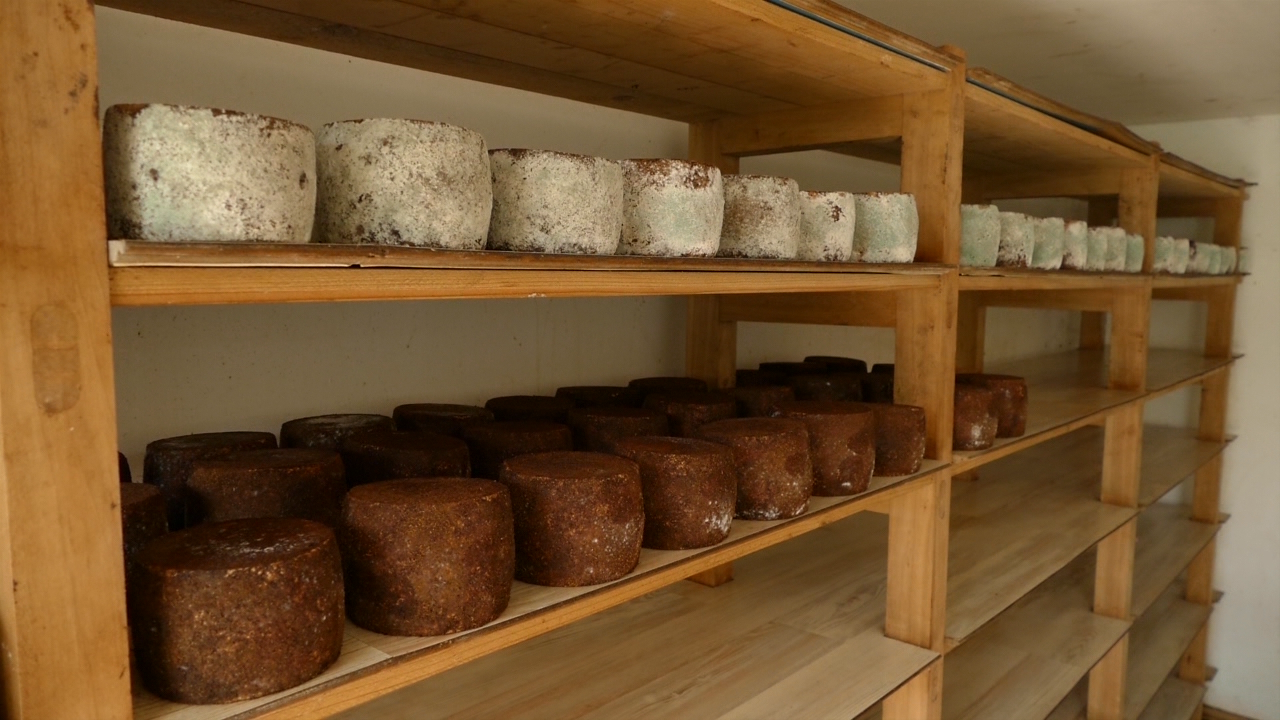Podsticati proizvodnju, ali i potrošnju kozjih sireva
