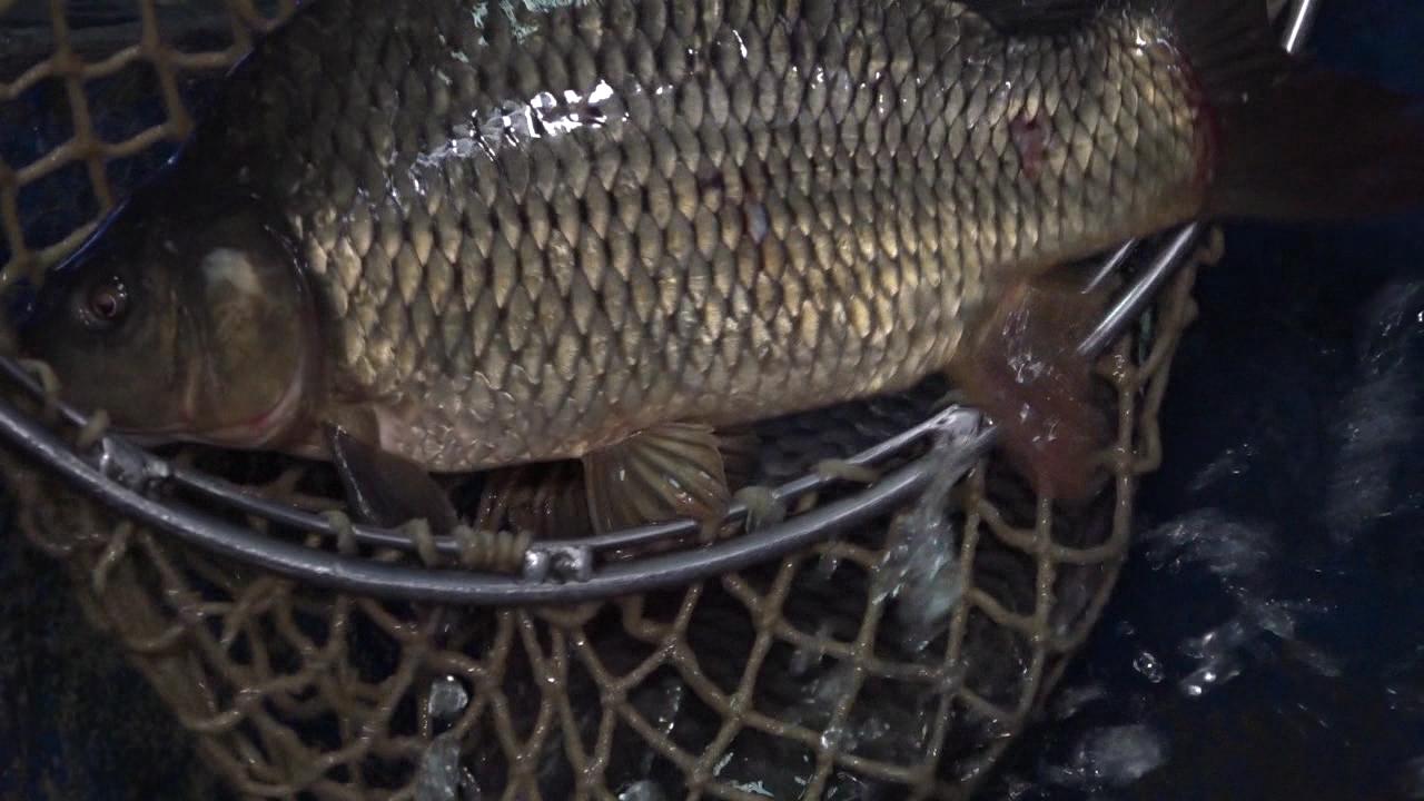 I pored nepovoljne godine za uzgoj, ribe će biti dovoljno