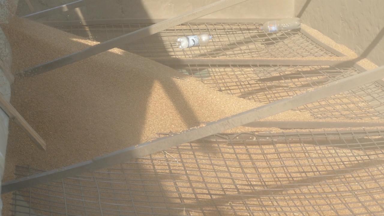 Prilikom isporuke žitarica izdavaće se uverenje o kvalitetu