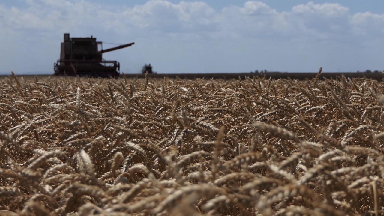 Obezbediti poseban podsticaj za najkvalitetniju pšenicu