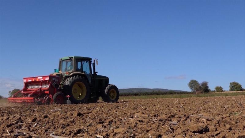 I pored smanjenih površina, pšenice će bito dovoljno