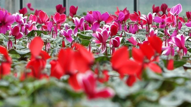 Sve se menja, ali ne i cena cveća
