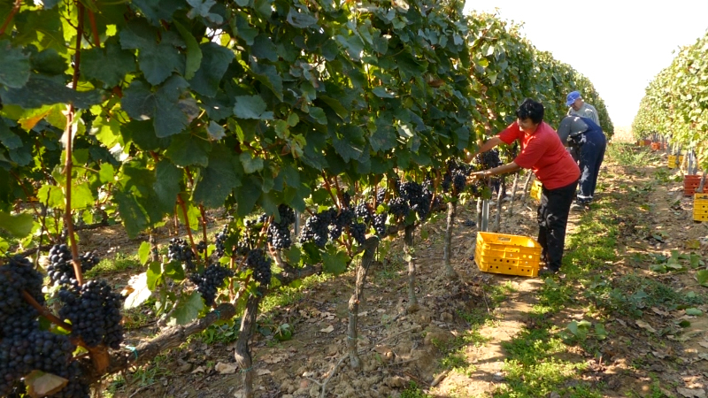 Srbija će imati registar sezonskih radnika