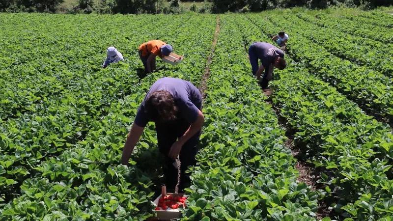 Da poljoprivrednici žive bolje od svog rada