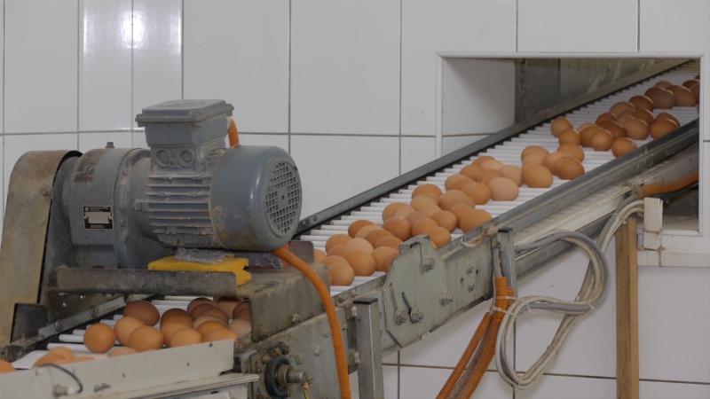 Nova klasifikacija kvaliteta jaja
