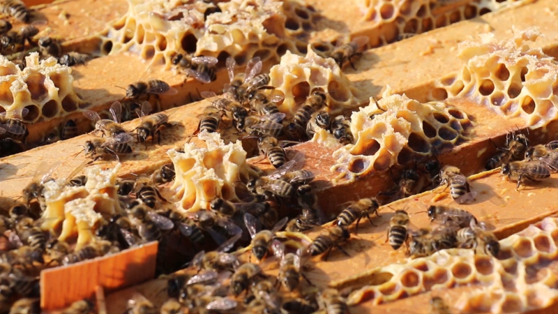 Pčelari žele subvencije za energente